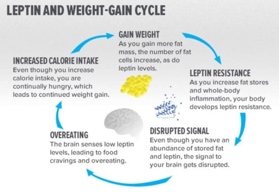 Truth about Leptin hormone, Leptin resistance and weight loss