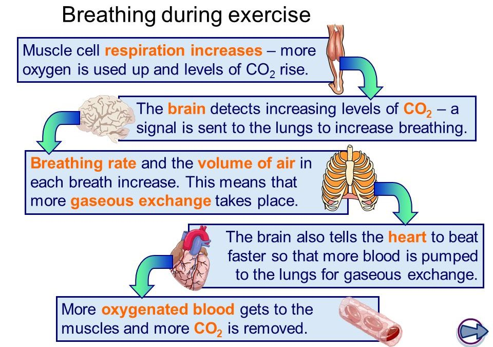 How The way we breath affects memory